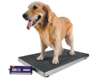 Bilancia per veterinari Kg 150/300 div. g 50/100 piatto cm 90X55 animali VT2